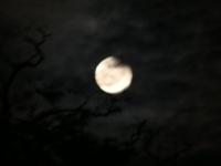 皆既月食blog.JPG