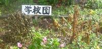 P1010948.JPGのサムネール画像
