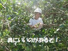 ブログ4(みかん).jpg
