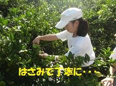 みかん2(ブログ).jpg