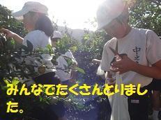 ブログ3(みかん).jpg