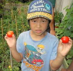 tomato1.jpgのサムネール画像のサムネール画像
